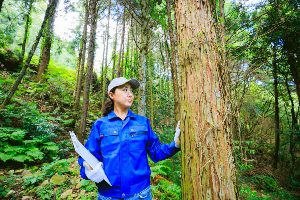 Asian women working with forestry Asian women working with forestry forester stock pictures, royalty-free photos & images