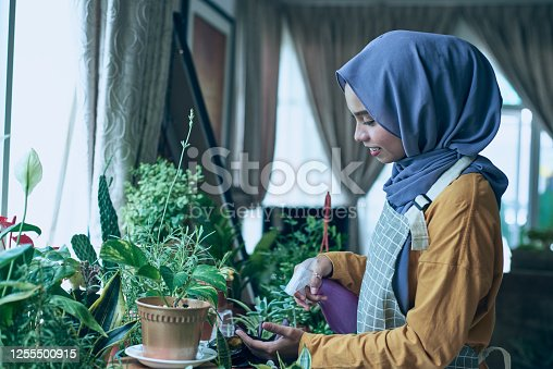 Malaysian young female muslim in hijab taking care of her flowers at home