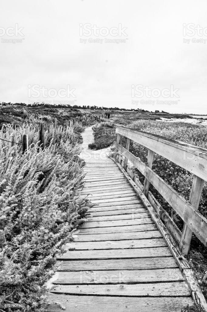 Asilomar Beach Path stock photo