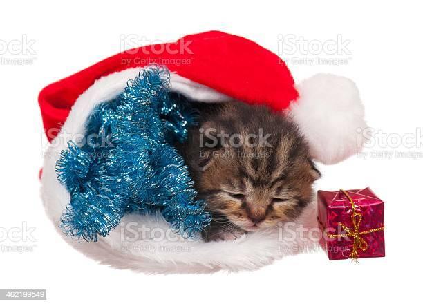 Asleep kitten picture id462199549?b=1&k=6&m=462199549&s=612x612&h=johz8kvwemorjbffeqf ercxcpbxxfldoregrx9ggve=