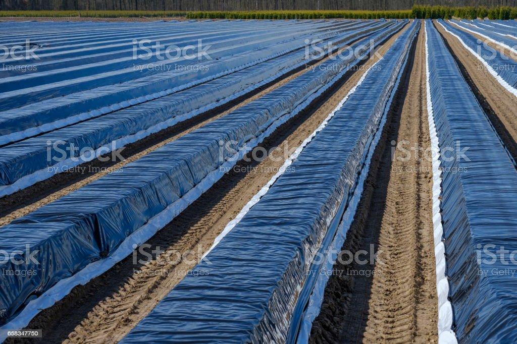 Espárragos camas cubiertas con película plástica - foto de stock