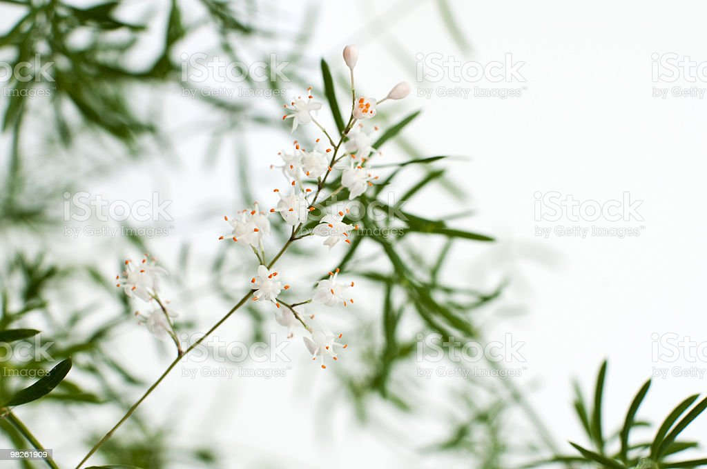 Asparago foto stock royalty-free