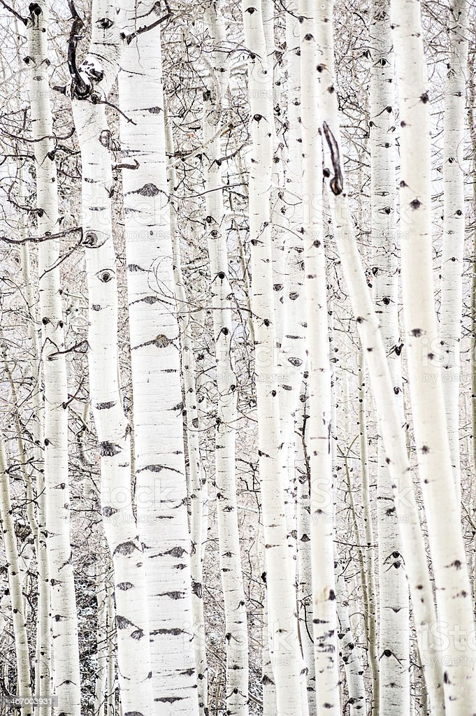 aspen abstract stock photo
