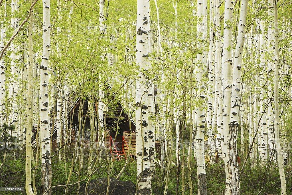 Aspen Forest Tree Hidden Cabin royalty-free stock photo
