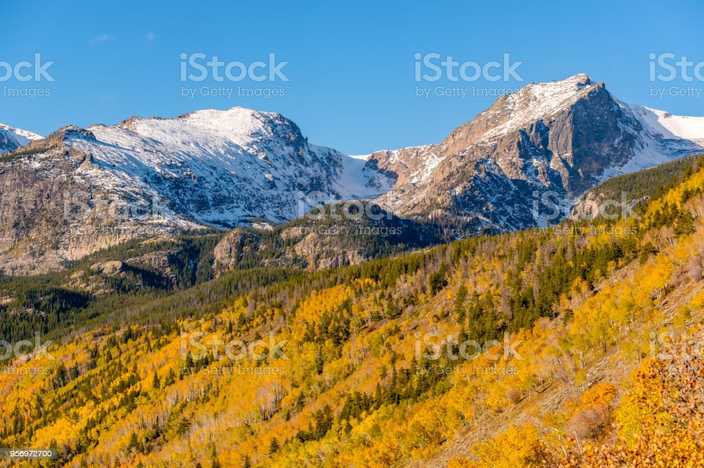 Aspen grove at autumn in Rocky Mountains stock photo