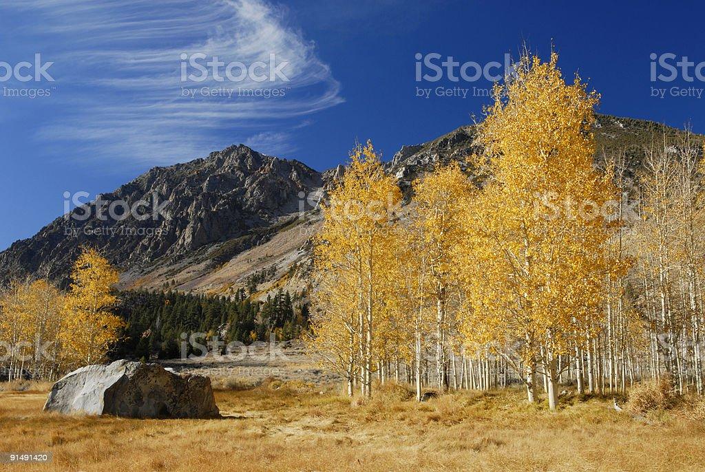 Aspen grove en este de Sierra Nevada - foto de stock
