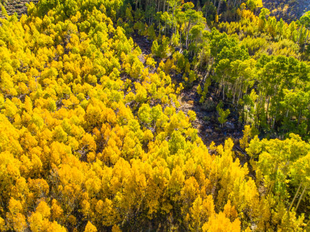 Aspen groves, Sierra Nevada Mountains – Foto