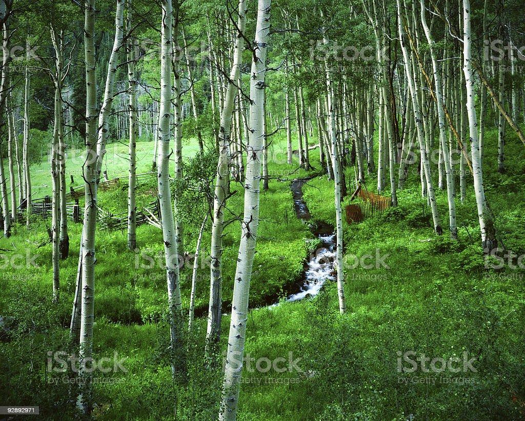 Aspen Mountain Ranch Stream Maroon Bells Wilderness Area Colorado stock photo