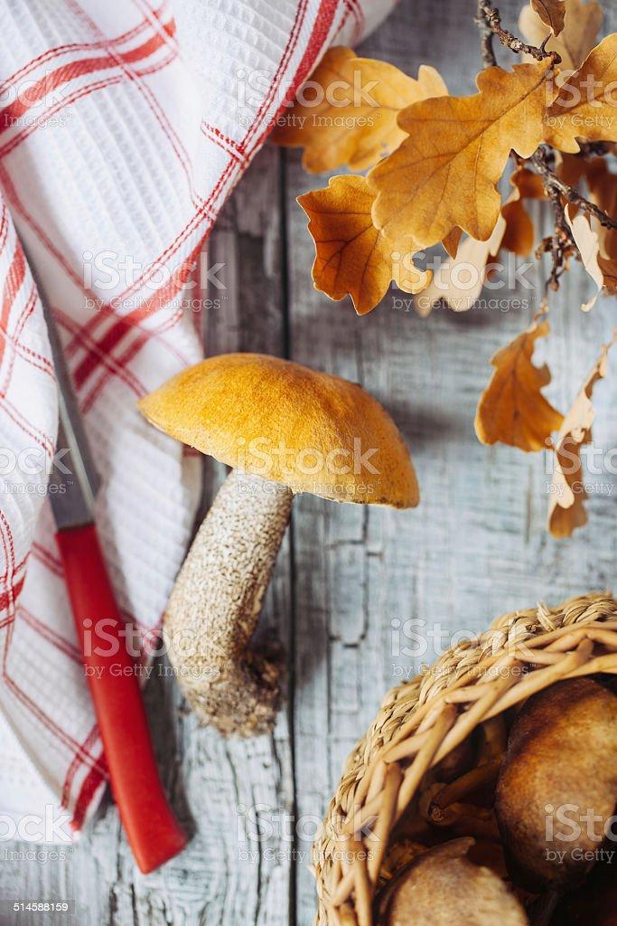 Aspen mushroom on a kitchen table stock photo