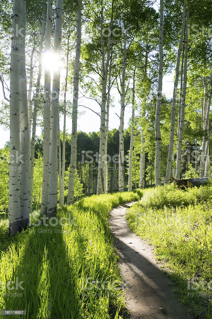 Aspen tree forest and mountain trail in Vail, Colorado stock photo