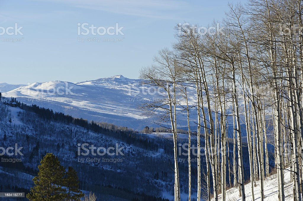 Aspen Trees and Mountain View Winter stock photo