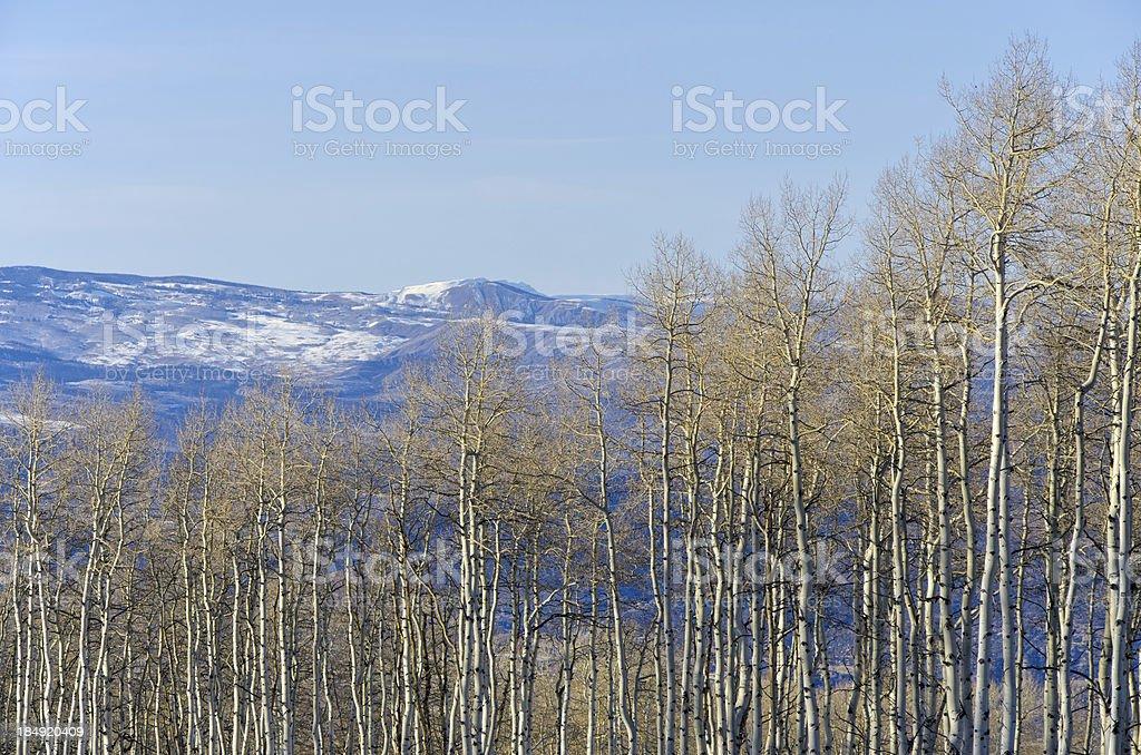 Aspen Trees and Mountains stock photo