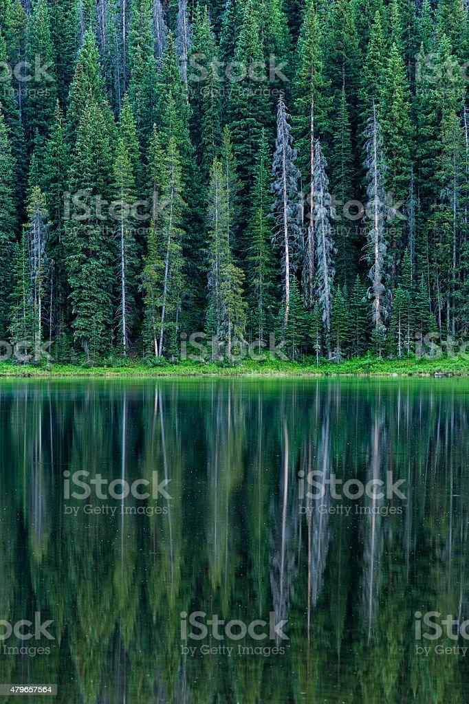 Aspen Trees Reflecting in MOuntain Lake stock photo