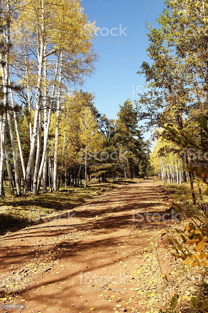 Aspen Trees Road Autumn royalty-free stock photo