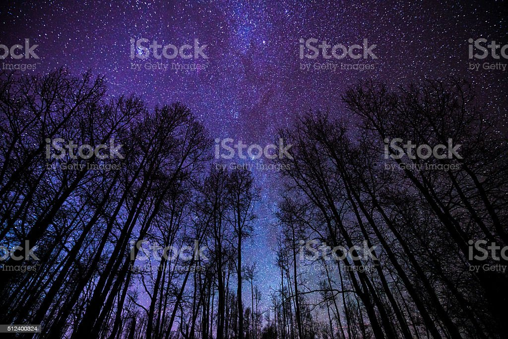 Aspens and Milky Way Night Landscape stock photo
