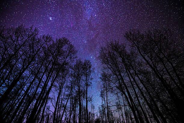 Aspens and Milky Way Night Landscape stock photo