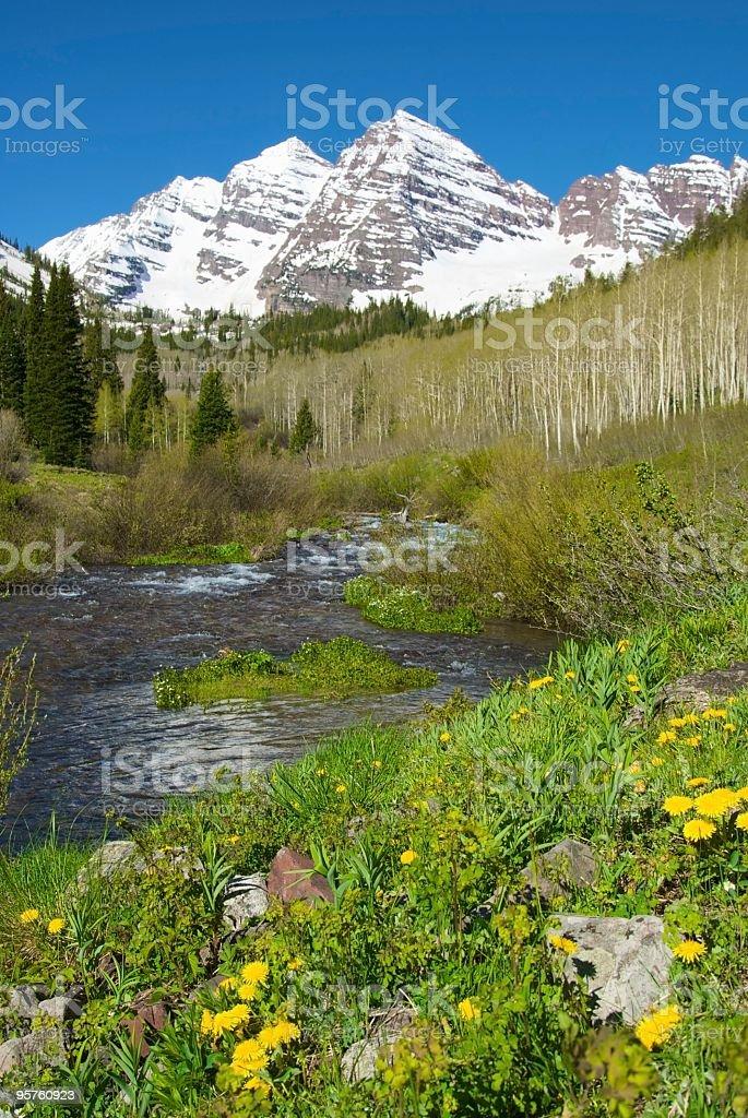 Aspen's Maroon Bells and Dandelion Flowers royalty-free stock photo