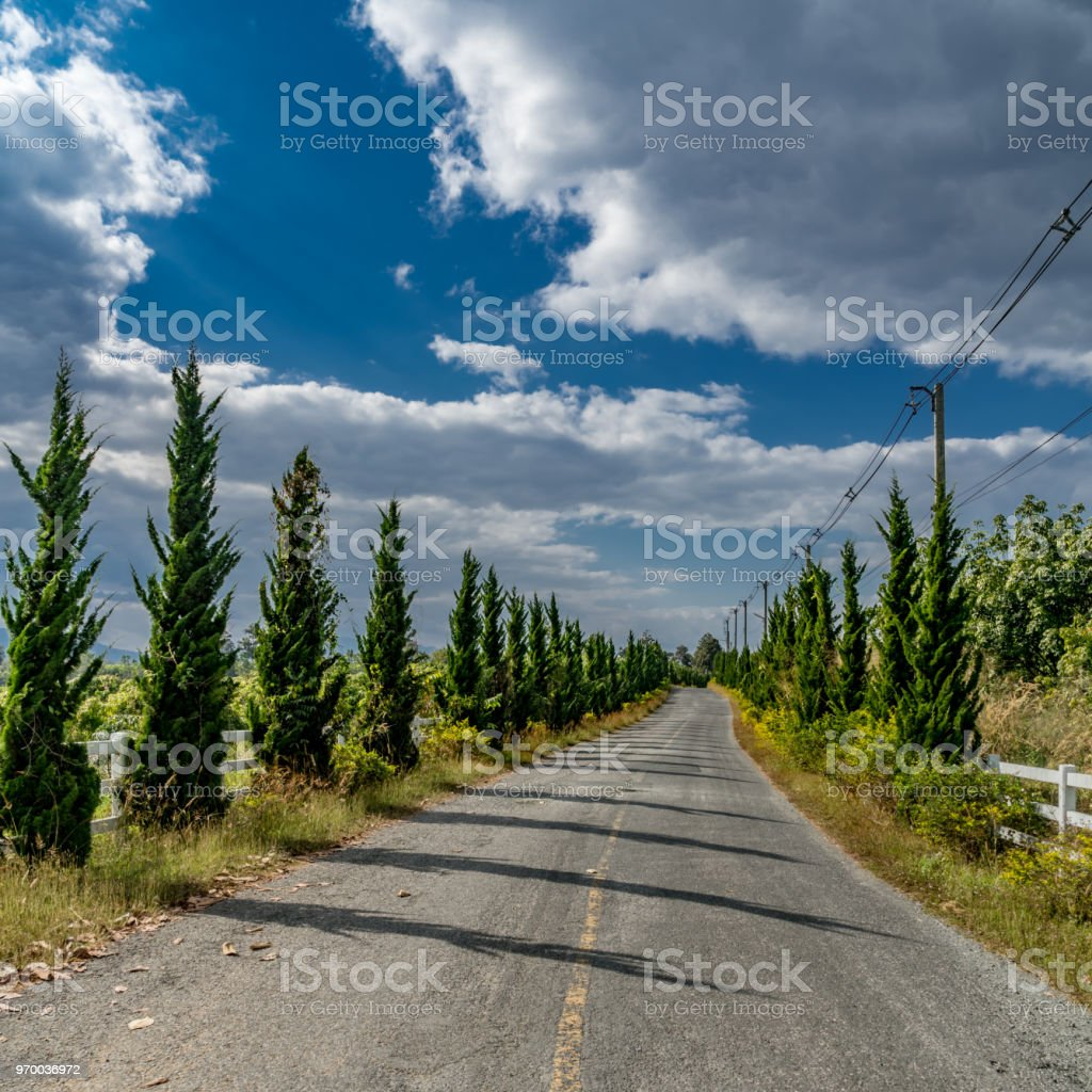 Asphalt country road with green pine trees at countryside of Thailand
