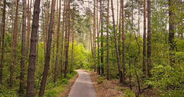 Asphalt forest road for walking picture id1245020735?b=1&k=6&m=1245020735&s=612x612&w=0&h=m4m7kkgaodudgbt 5k62ka8be1kdmvfx2gscatt 2wy=