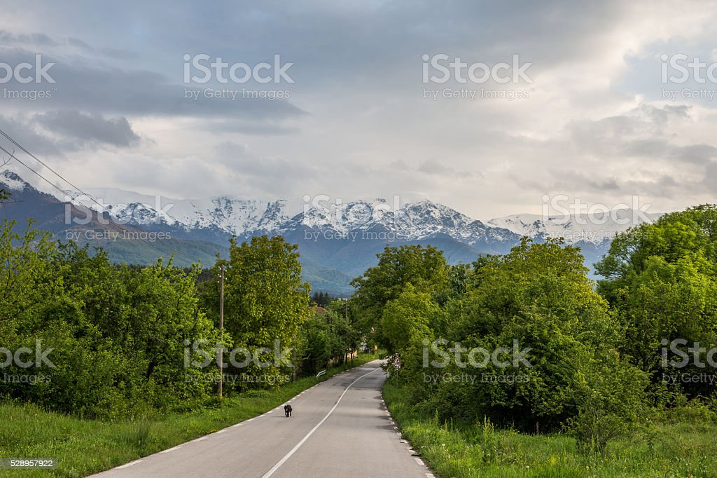 Asphalt road against snowy mountains background stock photo