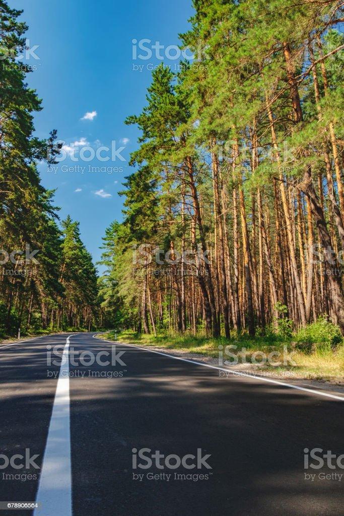 Asfalt yol ve bir çam ormanı royalty-free stock photo