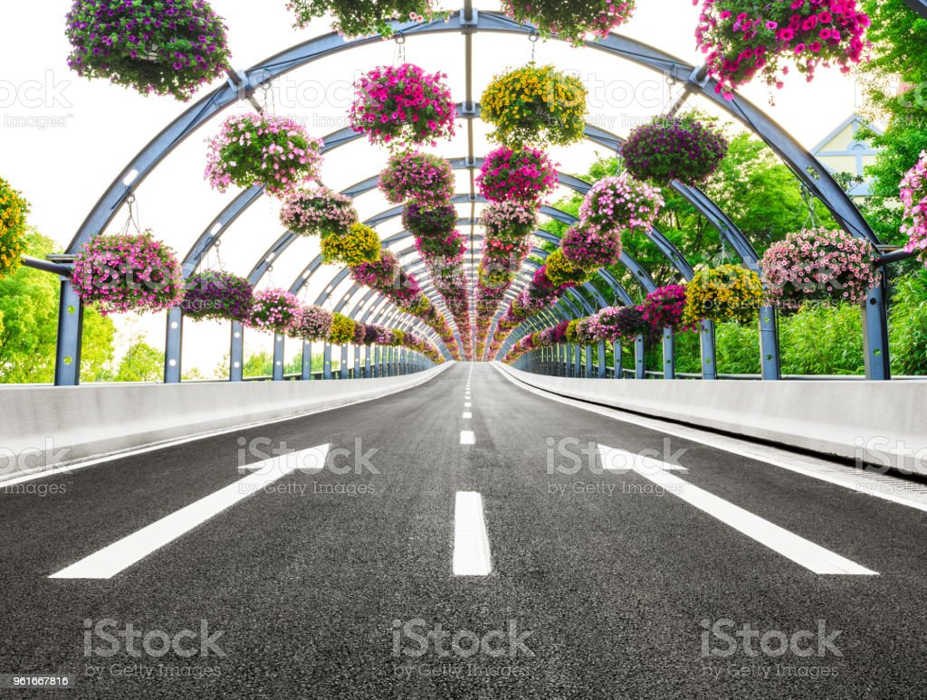 empty asphalt road and arched morning glory flower tunnel