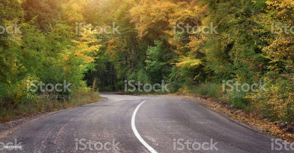 asphalt road and autumn forest.