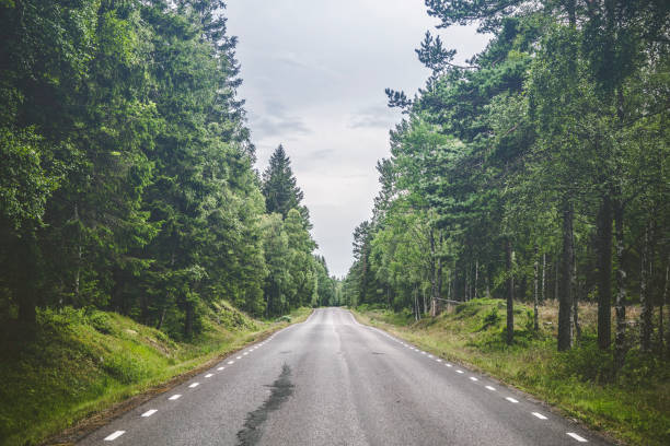 Asphalt road in a forest stock photo