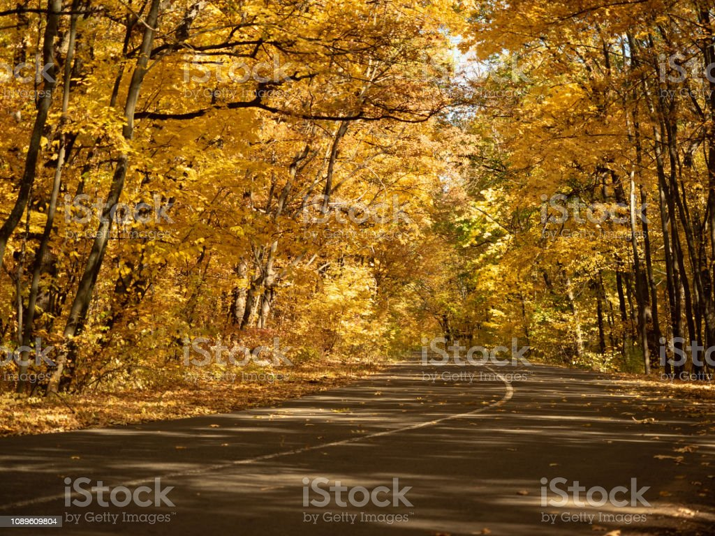 Asphalt road in autumn forest. Dense wood makes an arch of trees...