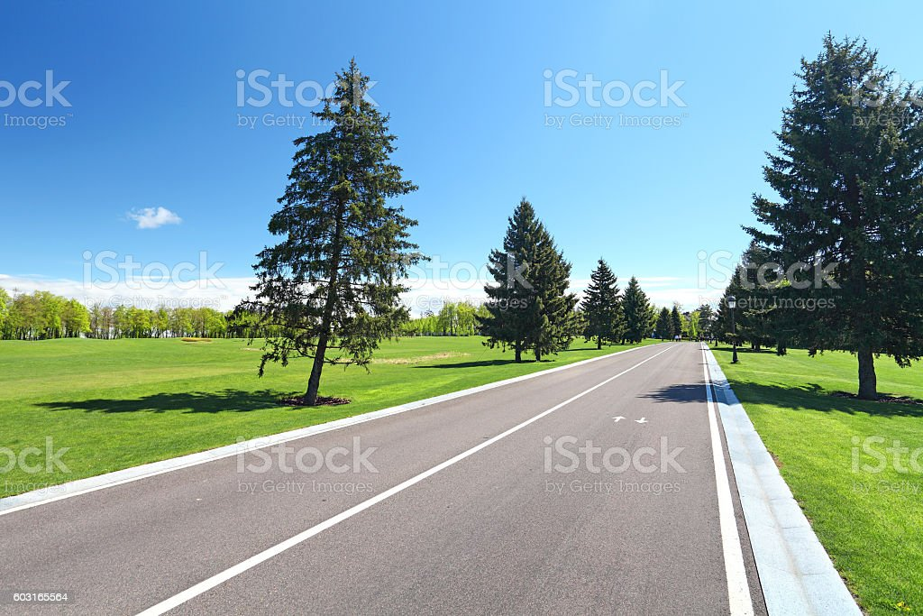 asphalt road in park stock photo