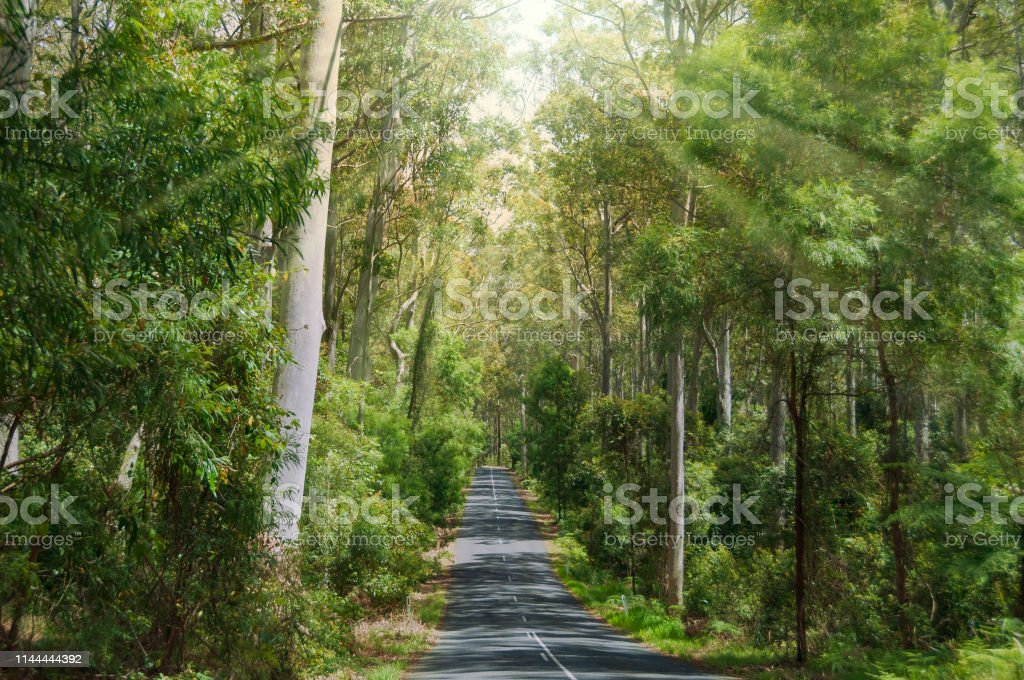 Asphalt road in the forest with sun shining through branches stock photo