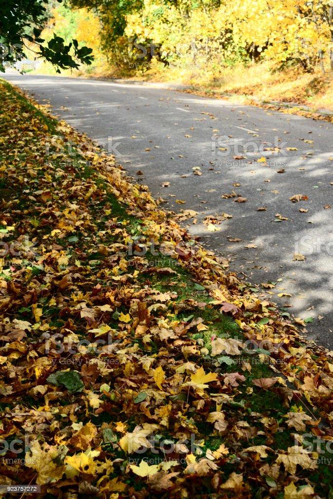 asphalt road in yellow autumn leaves stock photo