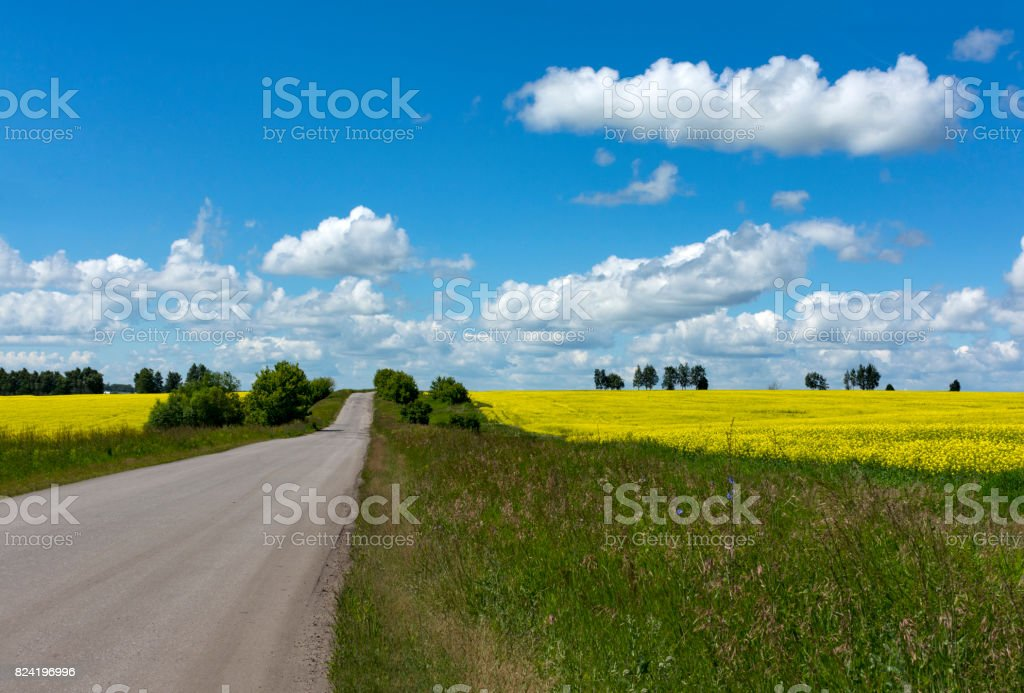 asphalt road through a field with green grass and yellow flowers, trees, blue sky with clouds, countryside stock photo