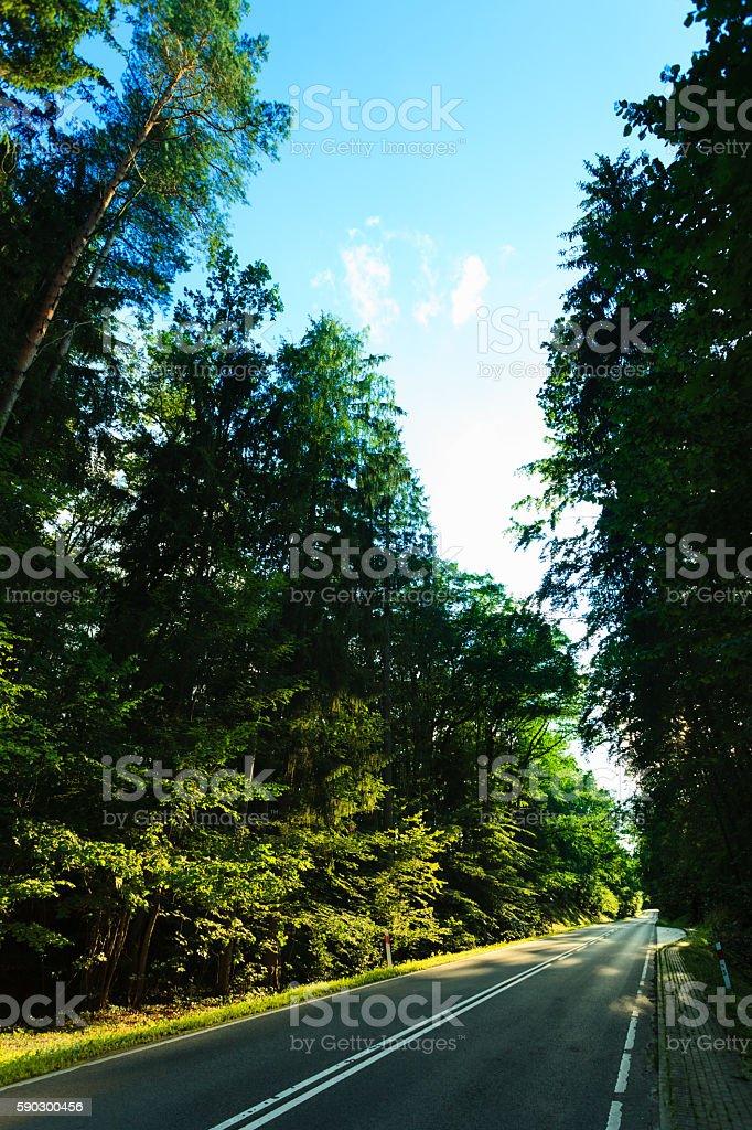 Асфальтовая дорога через Зеленое Лес Стоковые фото Стоковая фотография
