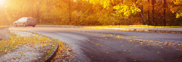 asphalt road with beautiful trees stock photo