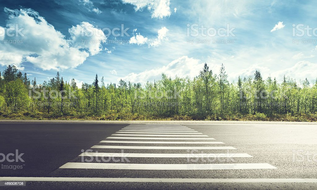Asphalt road with crosswalk in forest stock photo