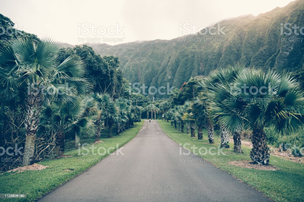 Asphalt Tropical Road With Palm And Mountains In Hawaii Hoomaluhia