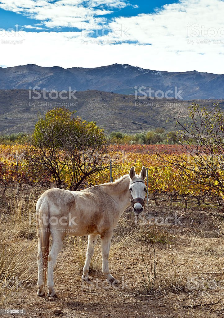 Ass on foothills of the Sierra Nevadas stock photo
