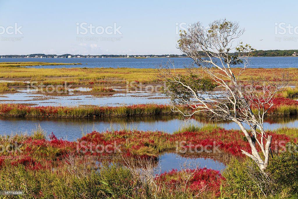 Assateague Island Autumn Landscape stock photo