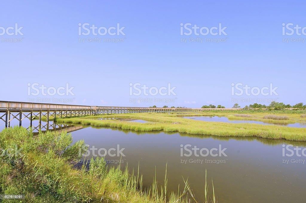 Assateague Island Life of the Marsh stock photo