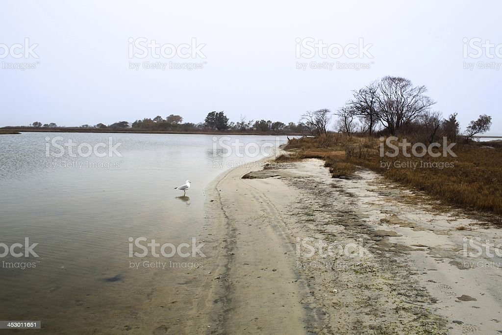 Assateague Island sandy shore in winter with seagull. stock photo