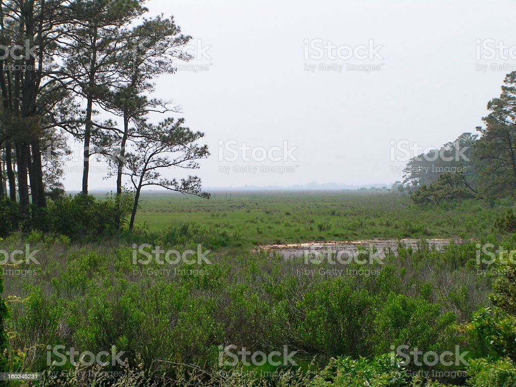 Assateague scenery royalty-free stock photo