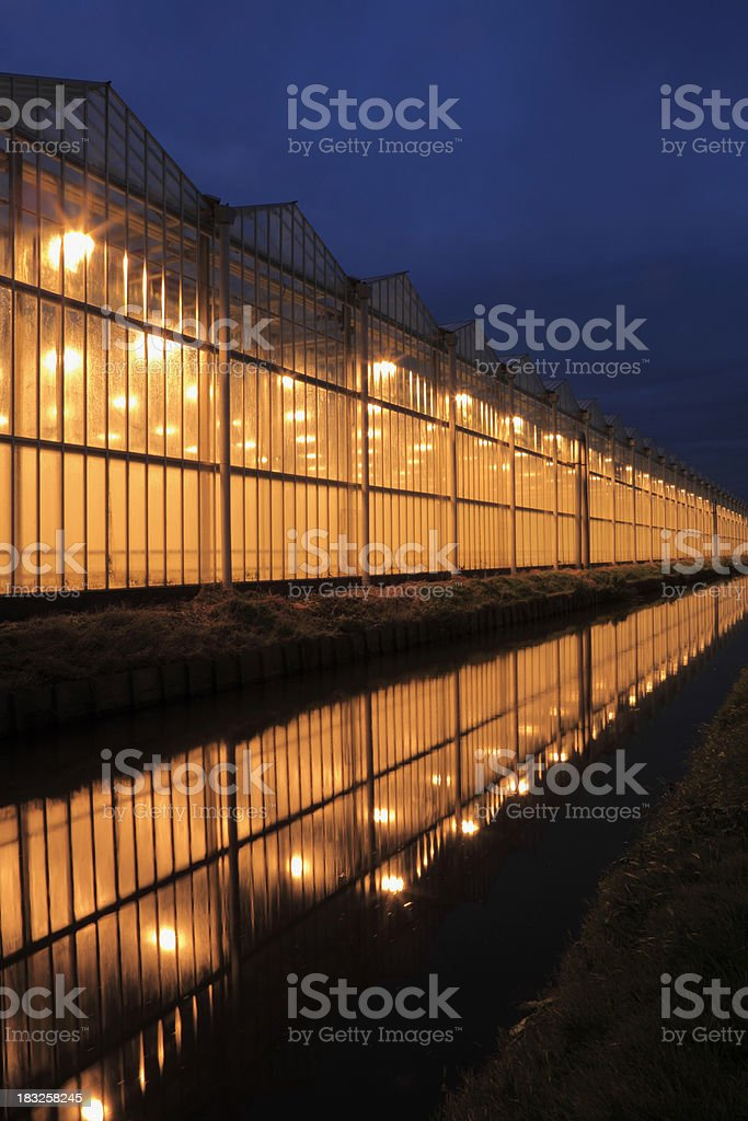 assimilation lights in a greenhouse royalty-free stock photo