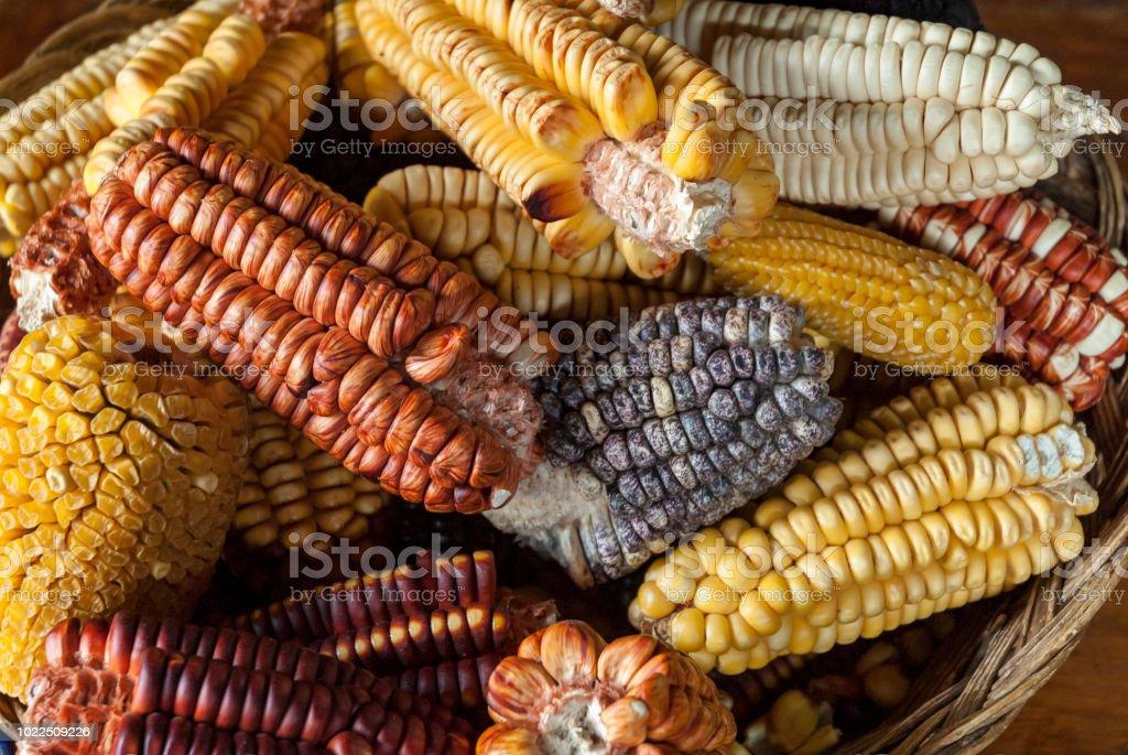 Sortierte Anden Maissorten – Foto
