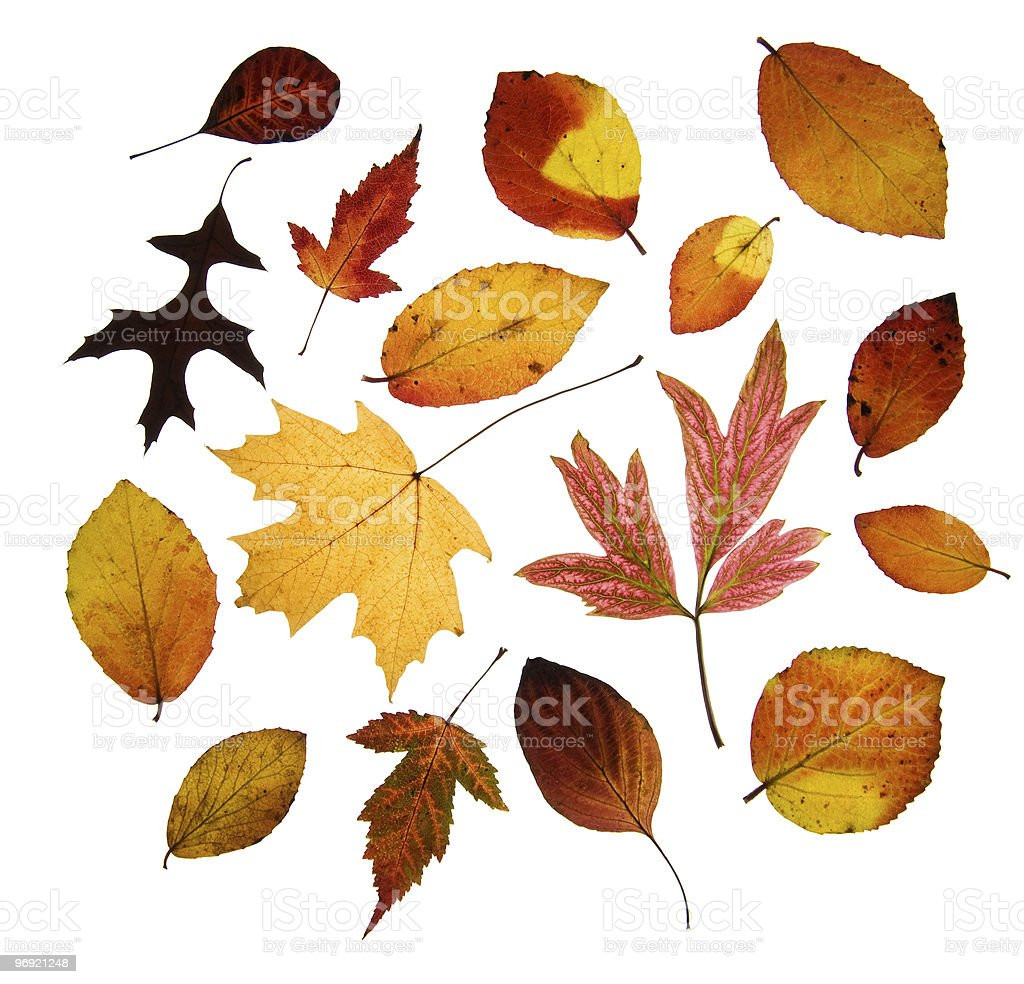 Assorted Autumn leaves royalty-free stock photo