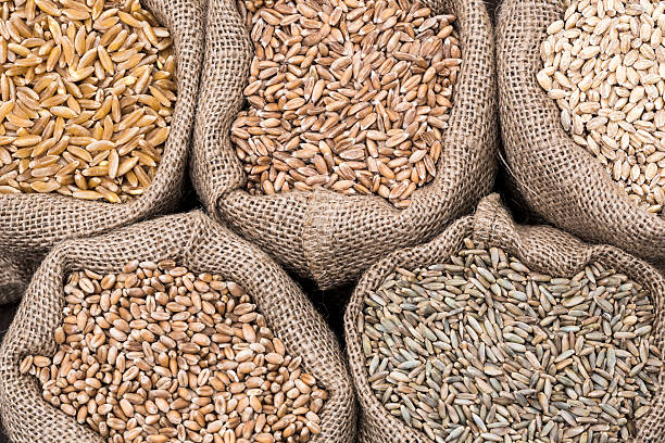 Assorted cereal grain Khorasan wheat Spelt wheat Barley Wheat and Rye spelt stock pictures, royalty-free photos & images