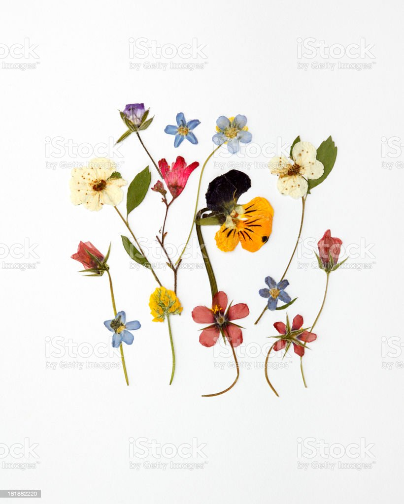 Assorted dried wildflowers arranged against white background stock photo