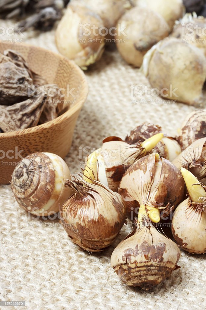 Assorted flower bulbs stock photo