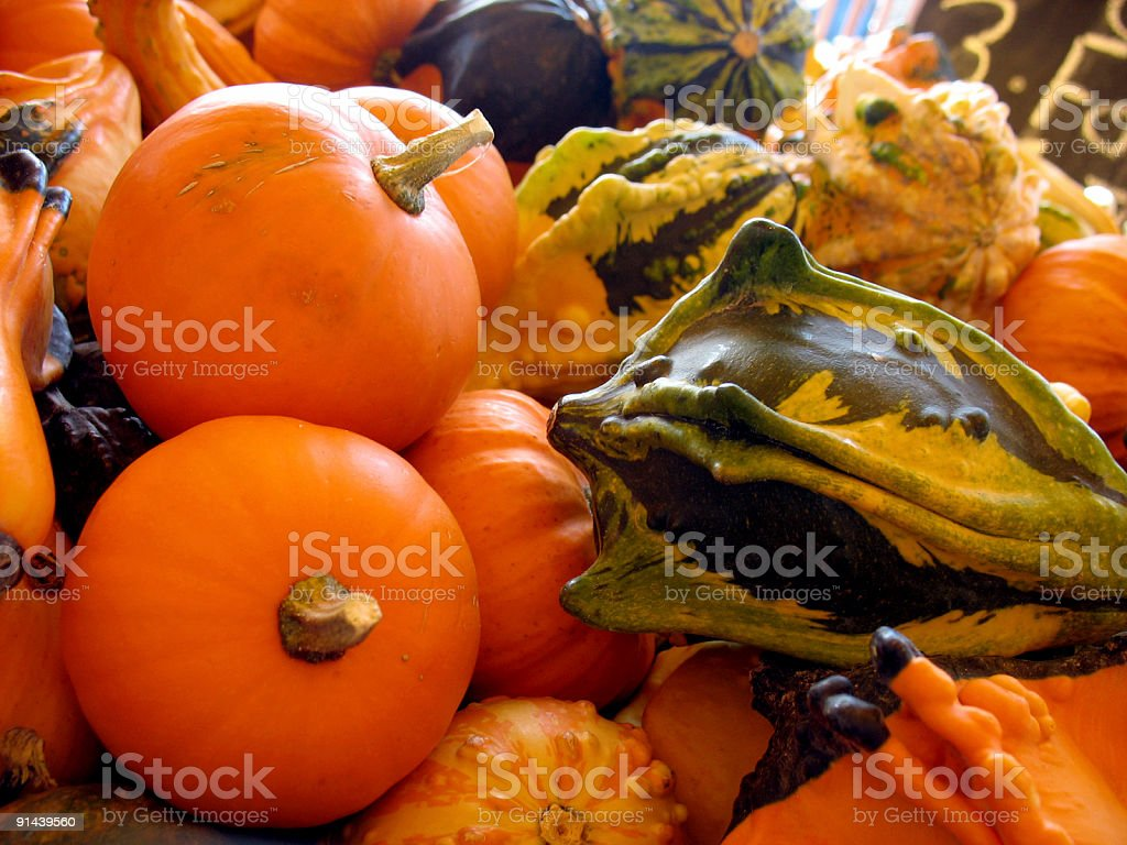 Assorted Gourds royalty-free stock photo