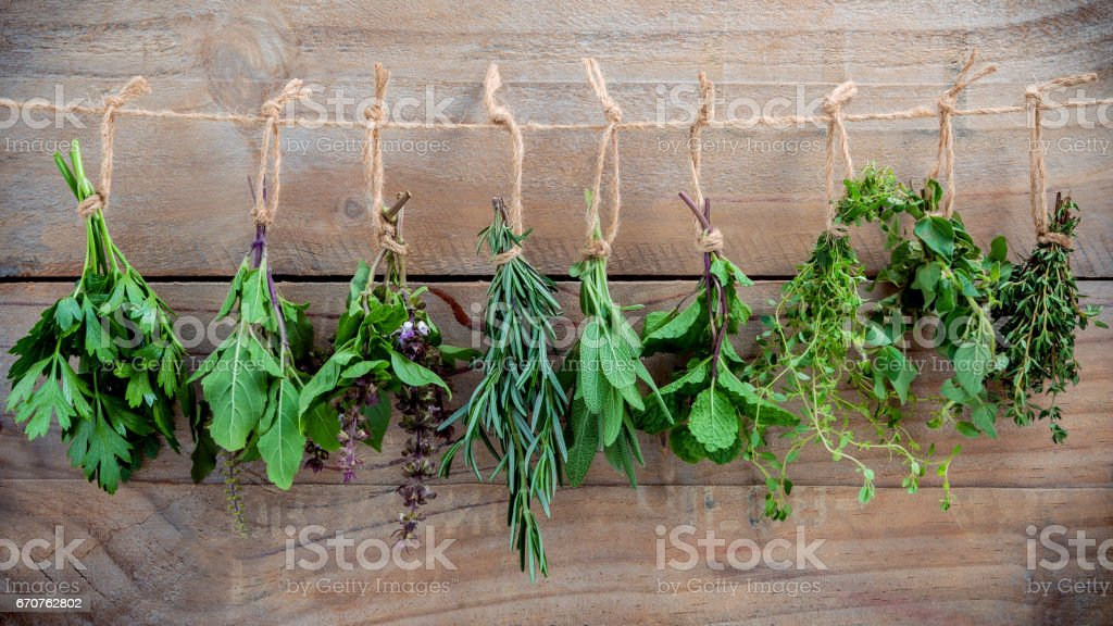 Assorted hanging herbs ,parsley ,oregano,mint,sage,rosemary,sweet basil,holy basil,  and thyme for seasoning concept on rustic old wooden background. stock photo